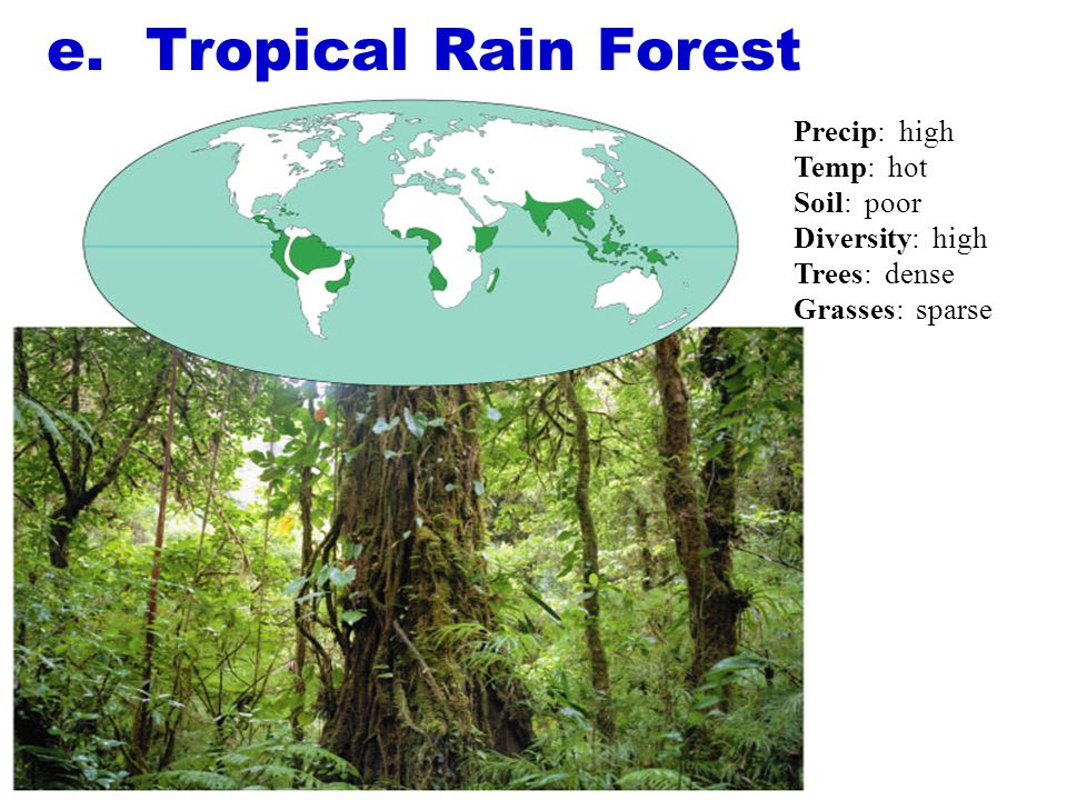 e. Tropical Rain Forest Precip: high Temp: hot Soil: poor