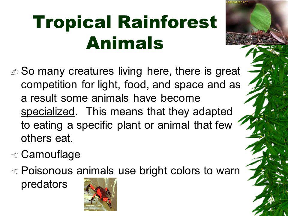Tropical Rainforest Animals