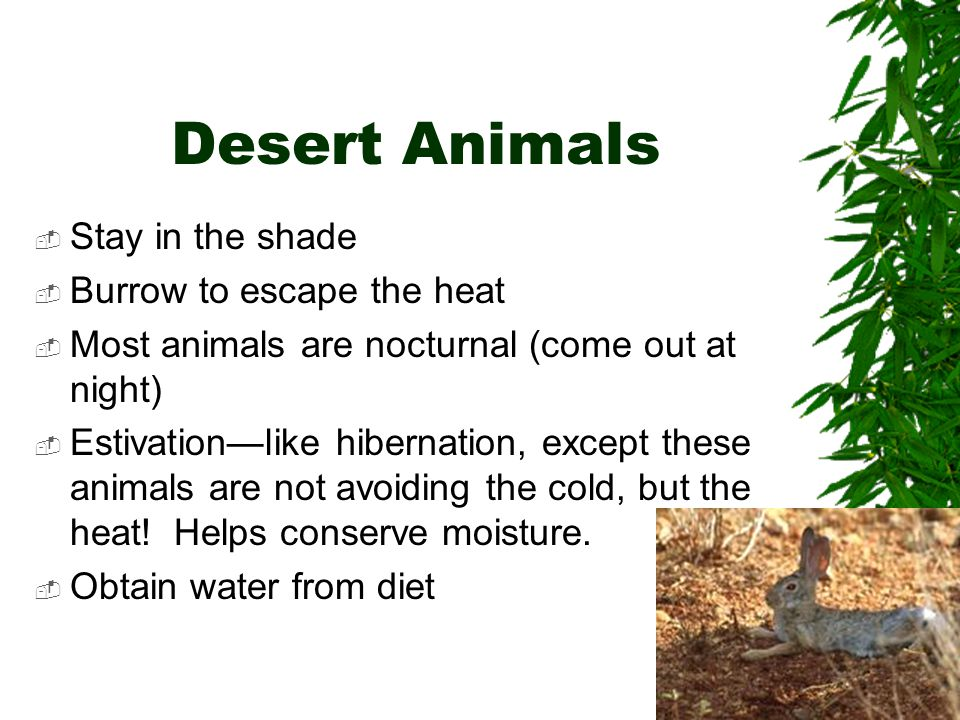 Desert Animals Stay in the shade Burrow to escape the heat