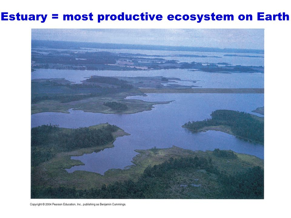 Estuary = most productive ecosystem on Earth