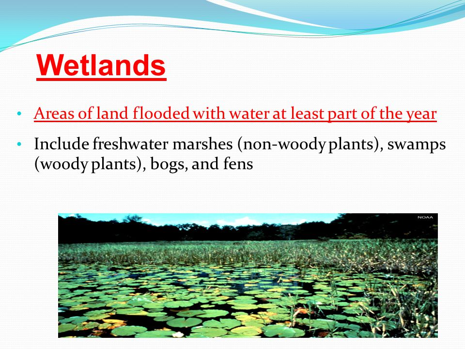 Wetlands Areas of land flooded with water at least part of the year