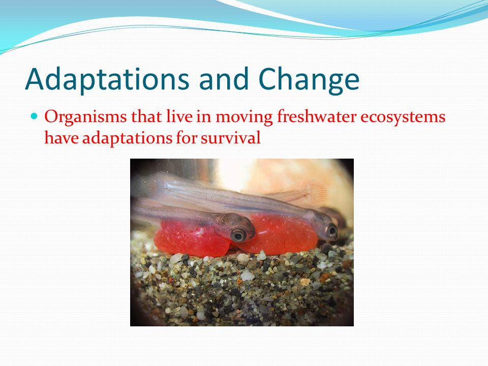 Adaptations and Change