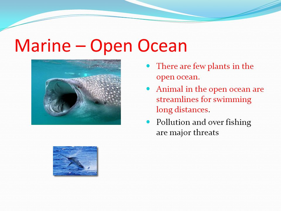 Marine – Open Ocean There are few plants in the open ocean.