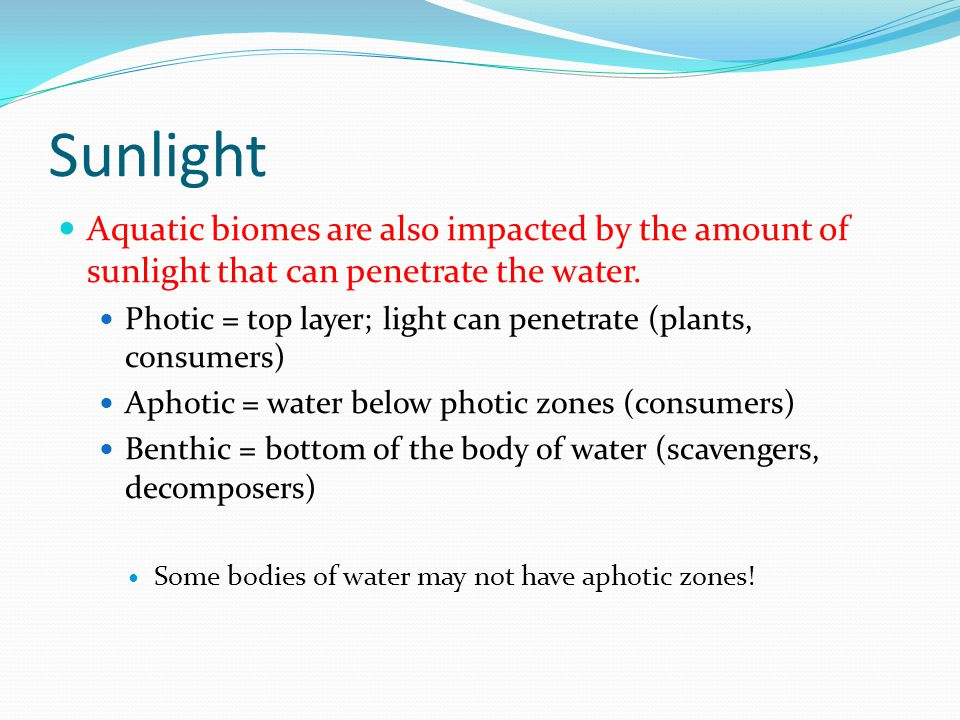 Sunlight Aquatic biomes are also impacted by the amount of sunlight that can penetrate the water.