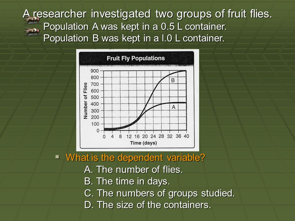 A researcher investigated two groups of fruit flies.