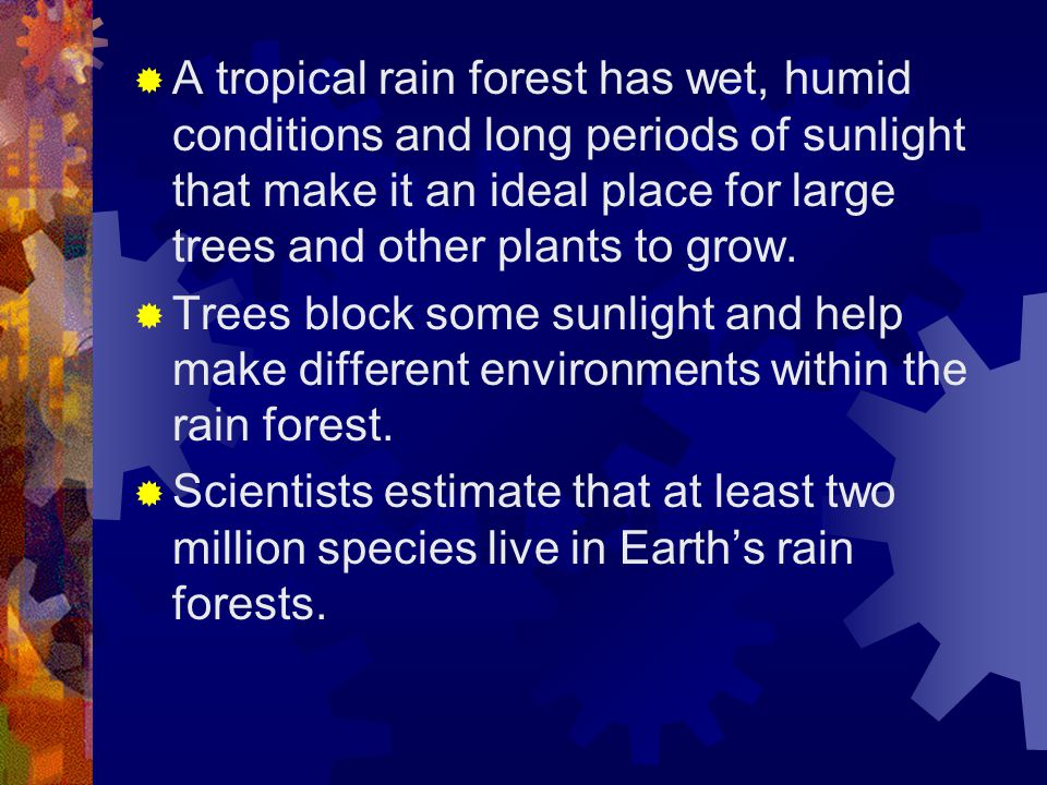 A tropical rain forest has wet, humid conditions and long periods of sunlight that make it an ideal place for large trees and other plants to grow.
