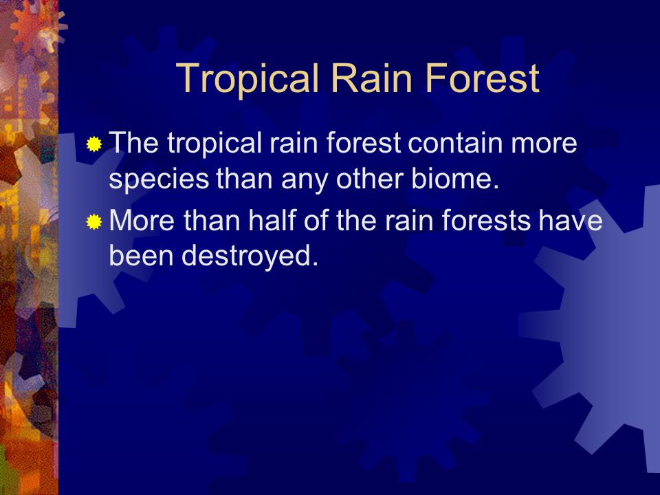 Tropical Rain Forest The tropical rain forest contain more species than any other biome.