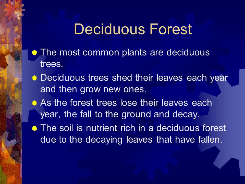 Deciduous Forest The most common plants are deciduous trees.