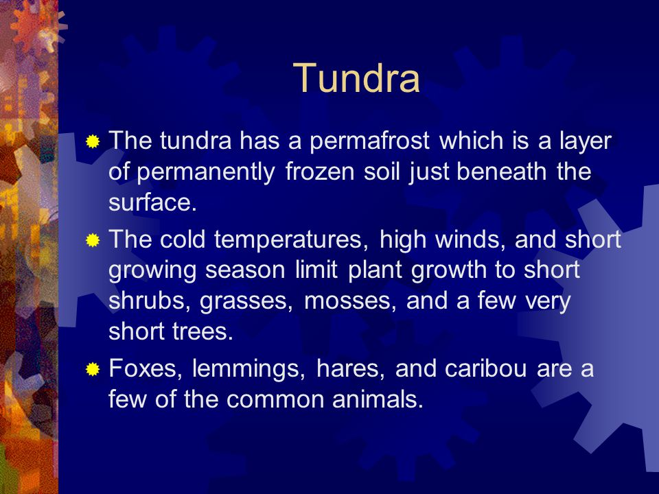 Tundra The tundra has a permafrost which is a layer of permanently frozen soil just beneath the surface.