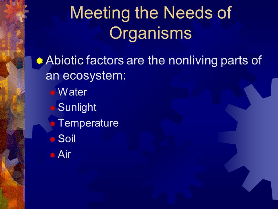 Meeting the Needs of Organisms