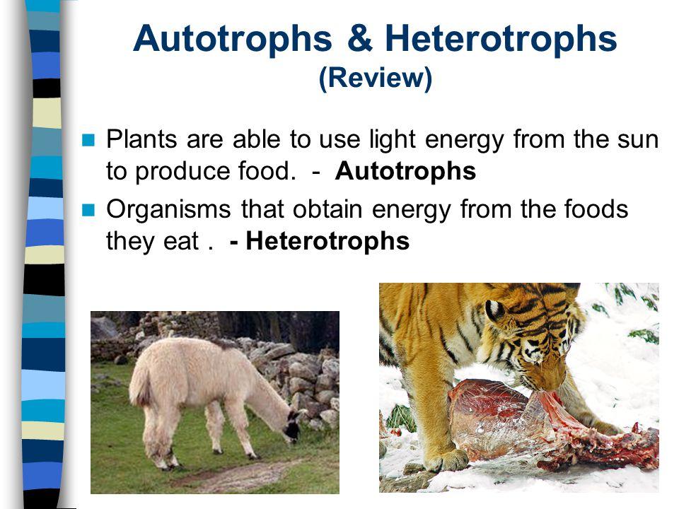 Autotrophs & Heterotrophs (Review)