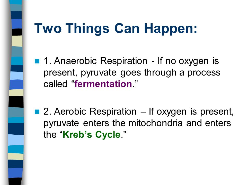 Two Things Can Happen: 1. Anaerobic Respiration - If no oxygen is present, pyruvate goes through a process called fermentation.