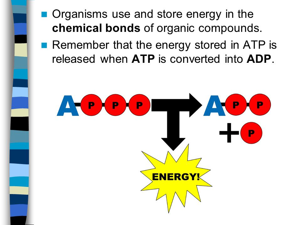 Organisms use and store energy in the chemical bonds of organic compounds.
