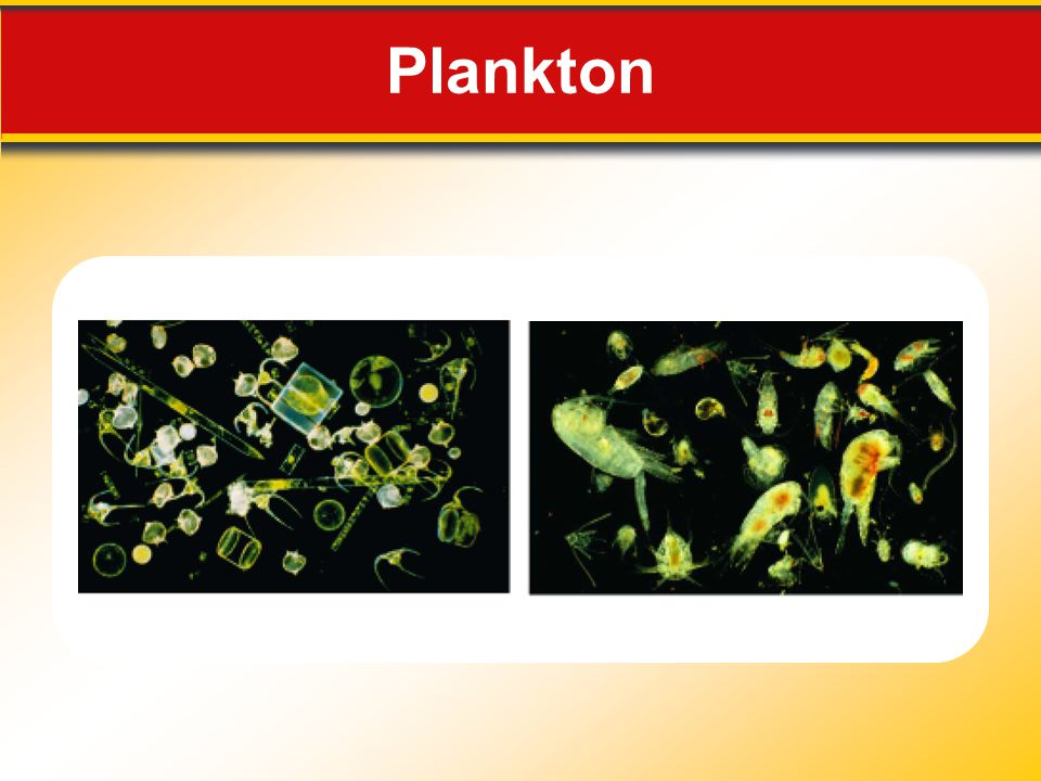 Plankton Makes no sense without caption in book