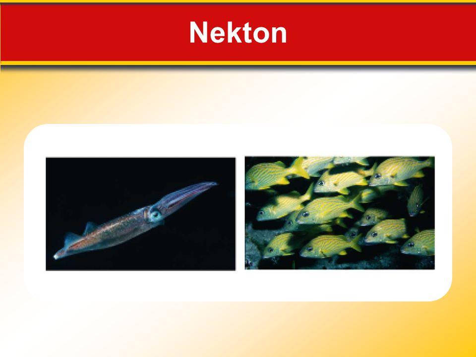 Nekton Makes no sense without caption in book