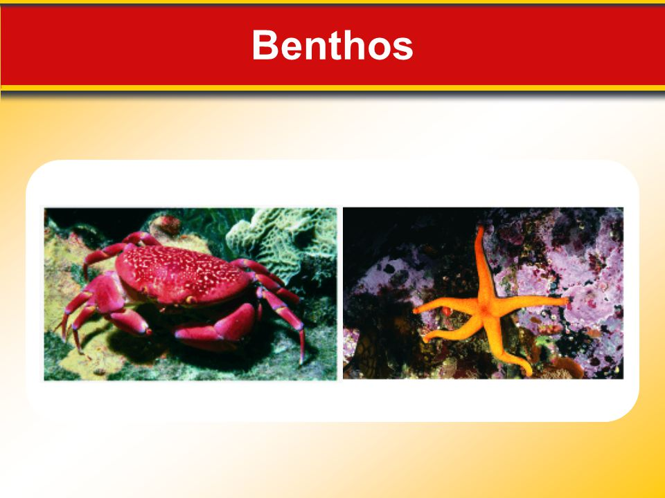 Benthos Makes no sense without caption in book