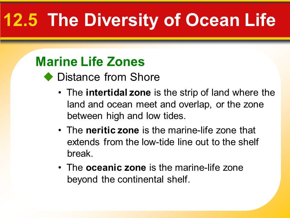 12.5 The Diversity of Ocean Life