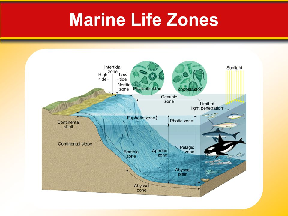 Marine Life Zones Makes no sense without caption in book