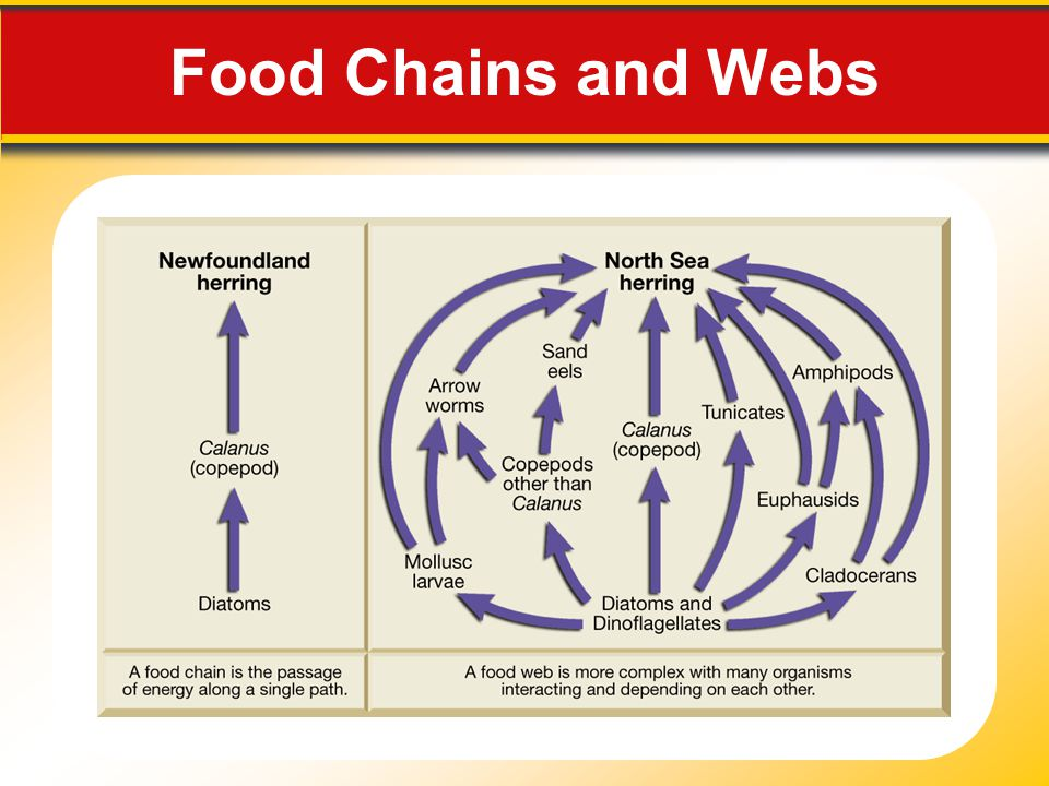 Food Chains and Webs Makes no sense without caption in book