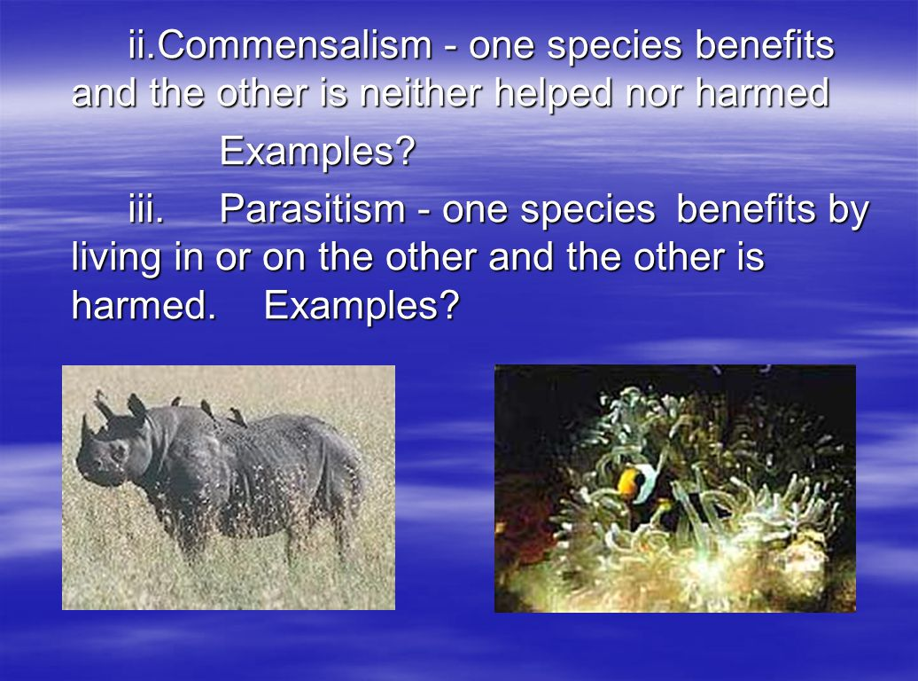 ii. Commensalism - one species benefits and the other is neither