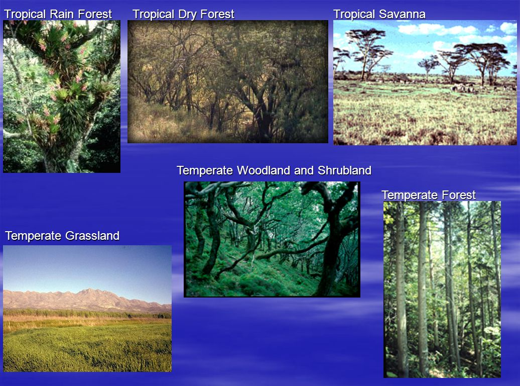 Tropical Rain Forest Tropical Dry Forest. Tropical Savanna. Temperate Woodland and Shrubland. Temperate Forest.