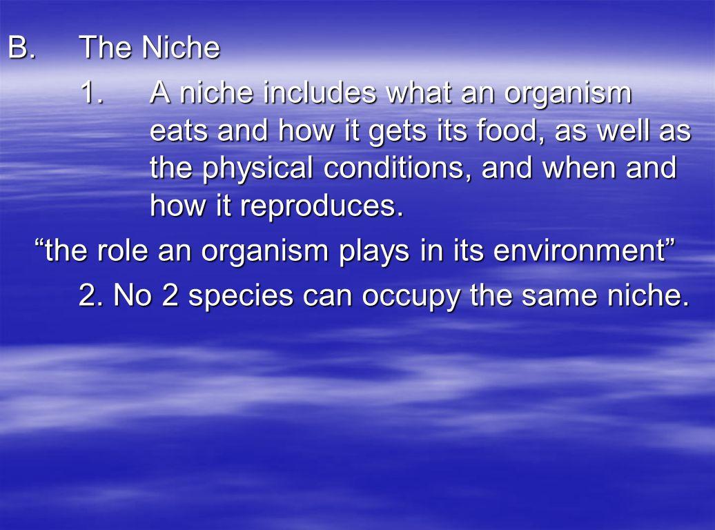 B. The Niche
