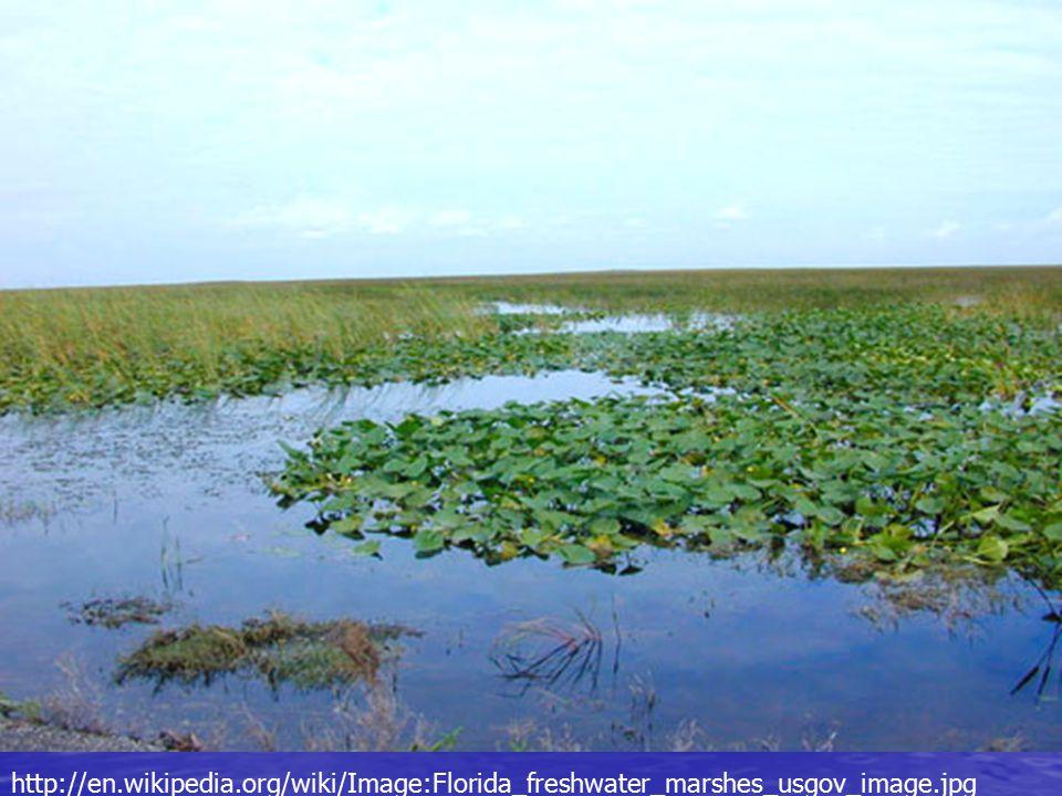 http://en.wikipedia.org/wiki/Image:Florida_freshwater_marshes_usgov_image.jpg