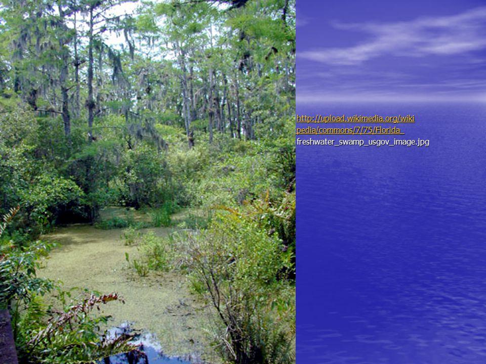 pedia/commons/7/75/Florida_ freshwater_swamp_usgov_image.jpg