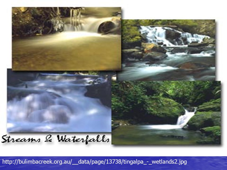 http://bulimbacreek. org. au/__data/page/13738/tingalpa_-_wetlands2