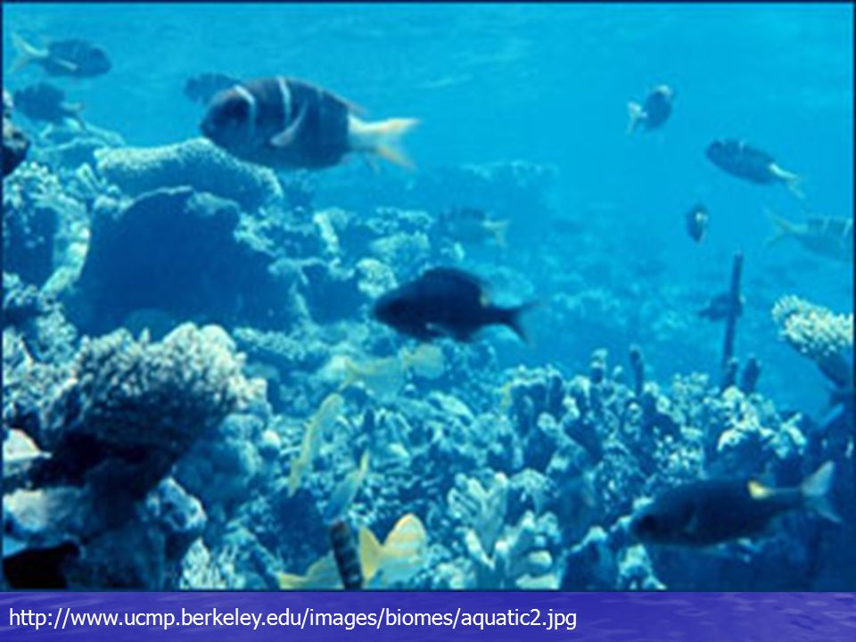 http://www.ucmp.berkeley.edu/images/biomes/aquatic2.jpg