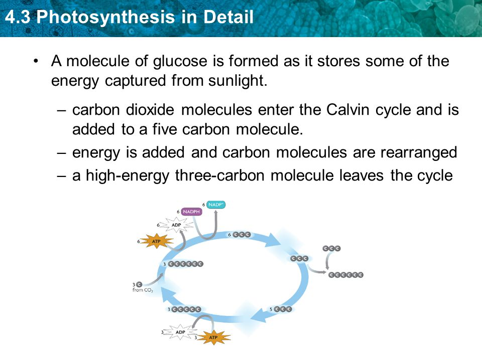 A molecule of glucose is formed as it stores some of the energy captured from sunlight.