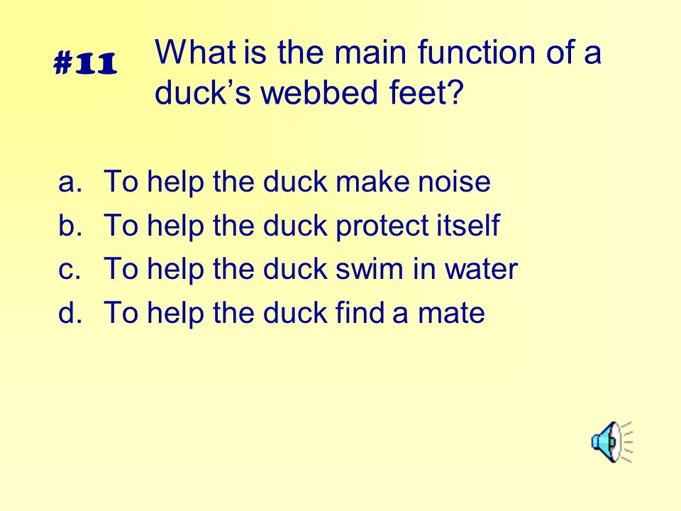 What is the main function of a duck's webbed feet