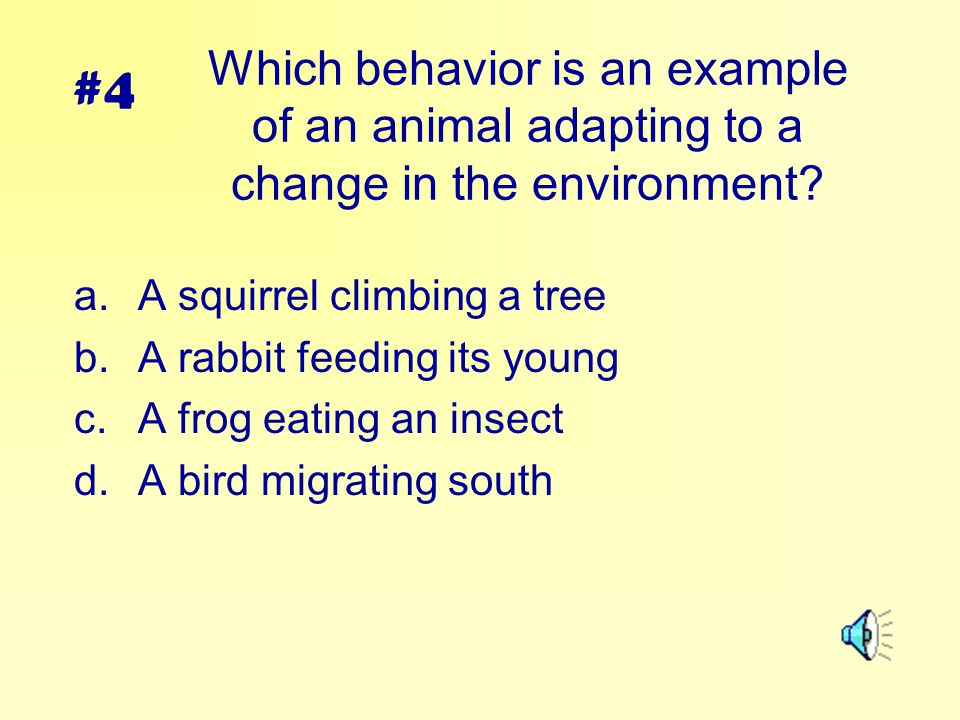 #4 Which behavior is an example of an animal adapting to a change in the environment A squirrel climbing a tree.