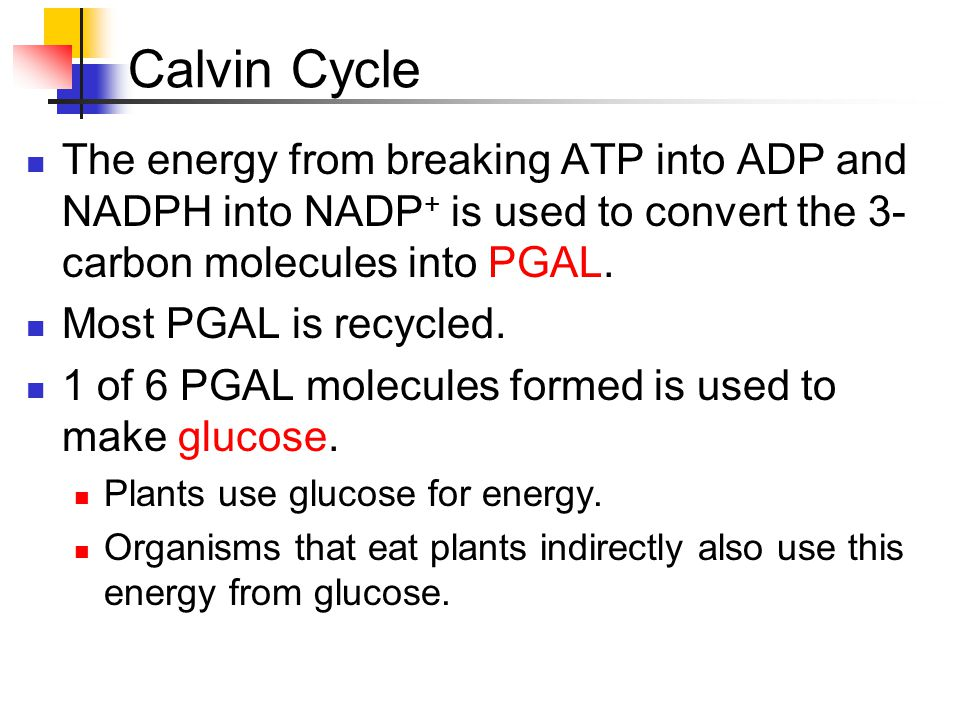 Calvin Cycle The energy from breaking ATP into ADP and NADPH into NADP+ is used to convert the 3-carbon molecules into PGAL.