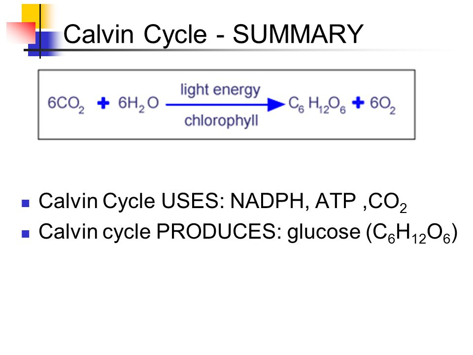 Calvin Cycle - SUMMARY Calvin Cycle USES: NADPH, ATP ,CO2