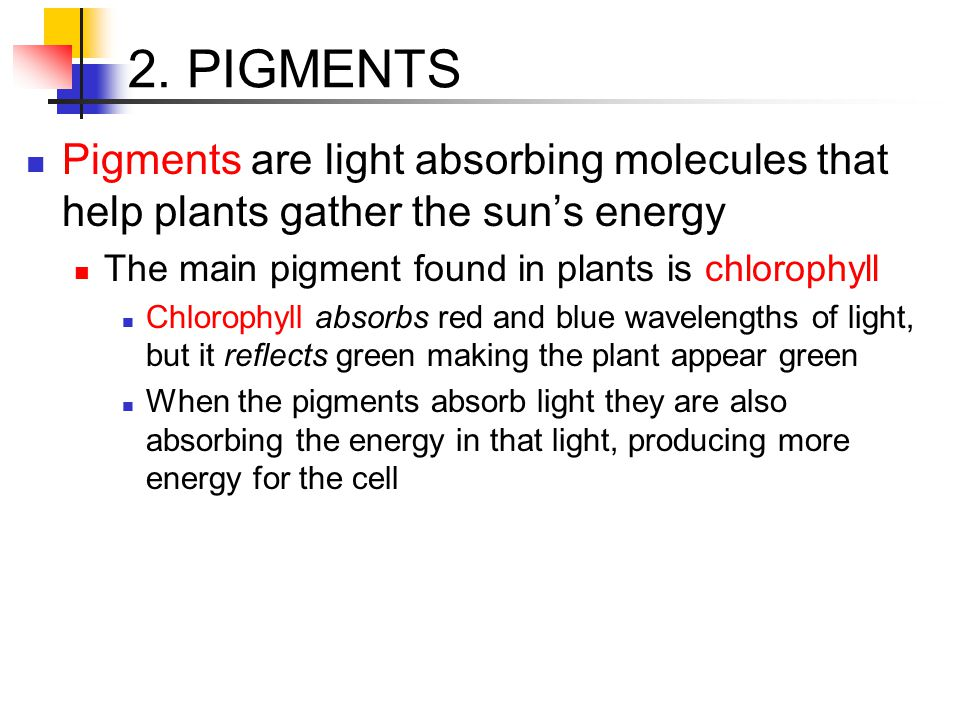2. PIGMENTS Pigments are light absorbing molecules that help plants gather the sun's energy. The main pigment found in plants is chlorophyll.