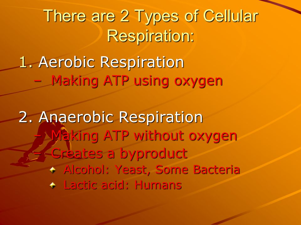 There are 2 Types of Cellular Respiration: