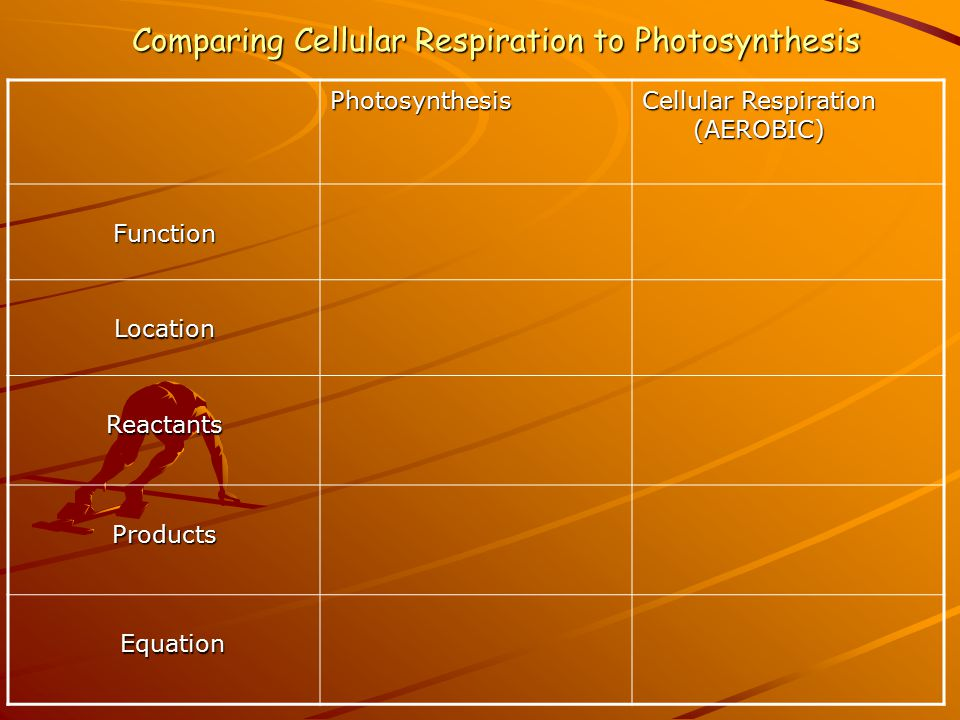 Comparing Cellular Respiration to Photosynthesis