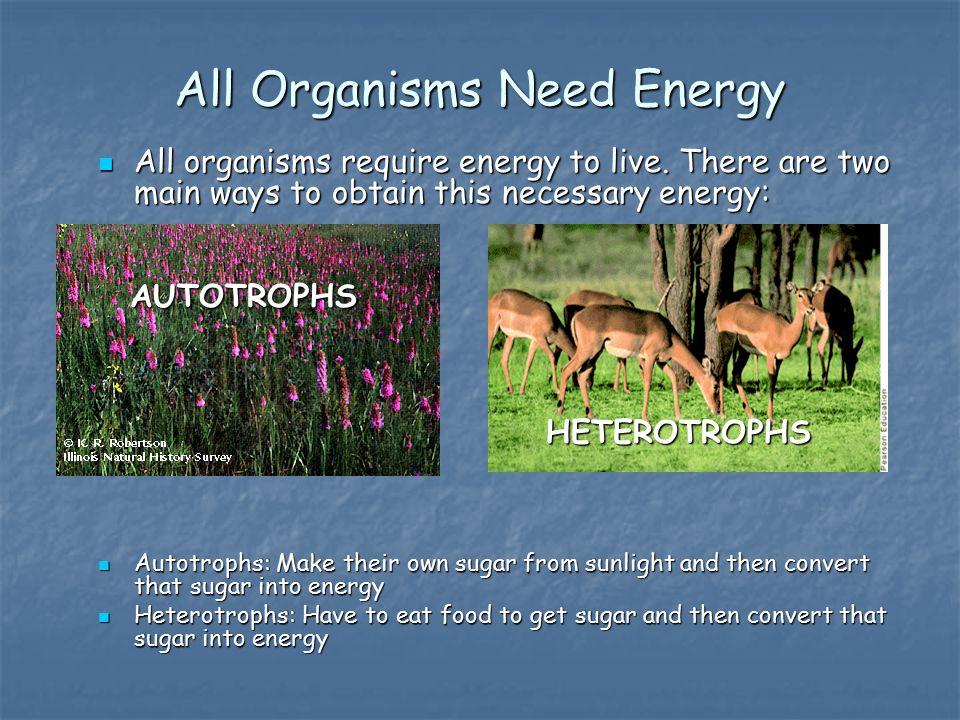 All Organisms Need Energy