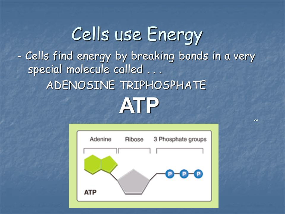 Cells use Energy - Cells find energy by breaking bonds in a very special molecule called . . . ADENOSINE TRIPHOSPHATE.