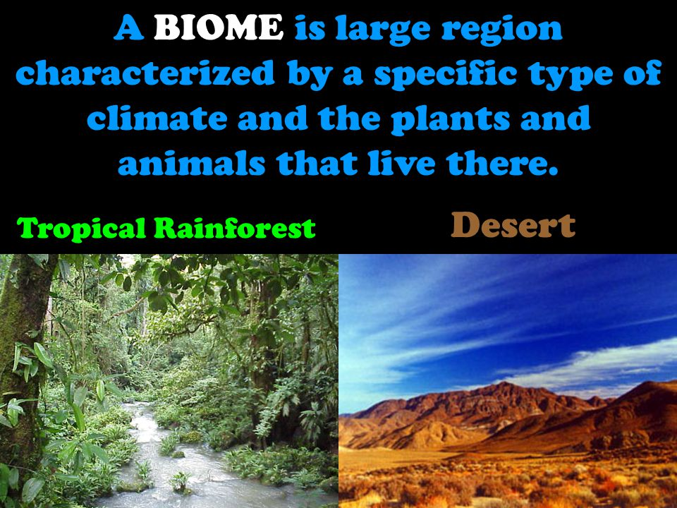 A BIOME is large region characterized by a specific type of climate and the plants and animals that live there.