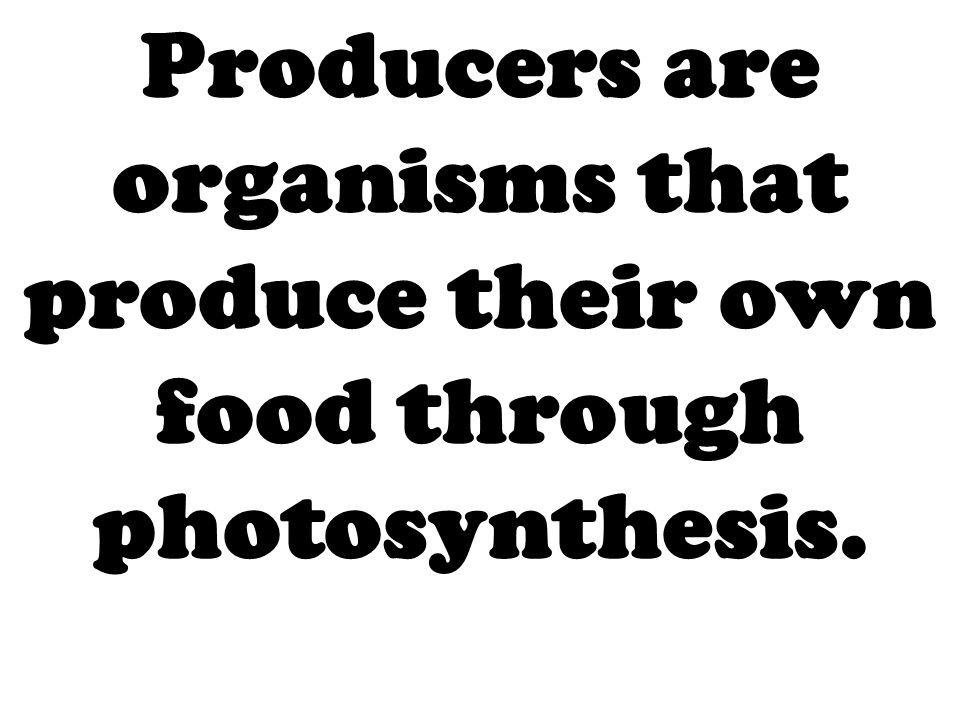 Producers are organisms that produce their own food through photosynthesis.