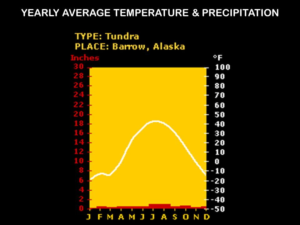 YEARLY AVERAGE TEMPERATURE & PRECIPITATION