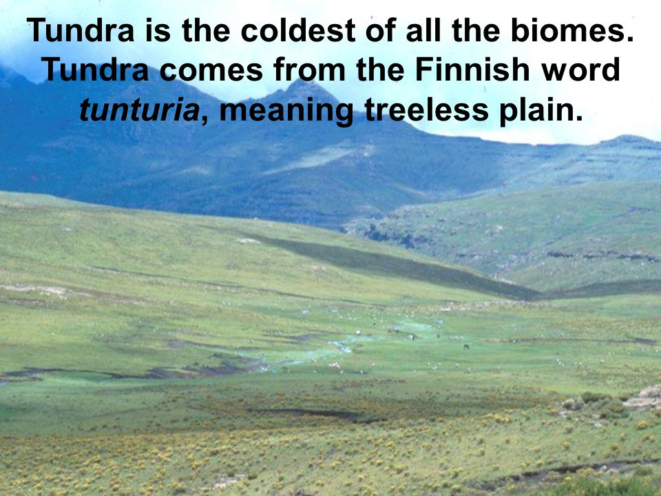 Tundra is the coldest of all the biomes