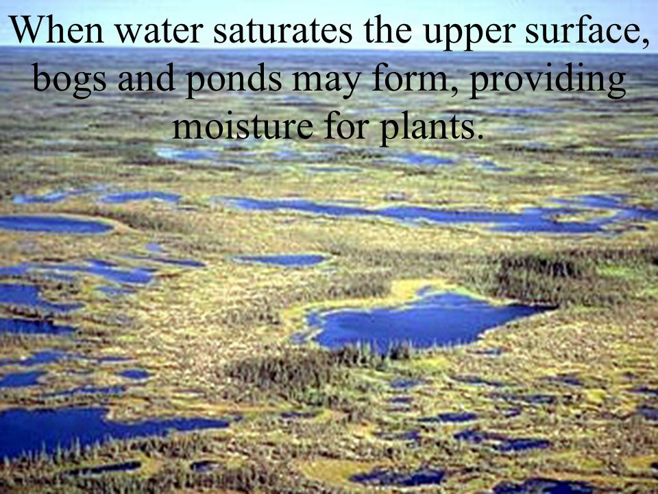 When water saturates the upper surface, bogs and ponds may form, providing moisture for plants.