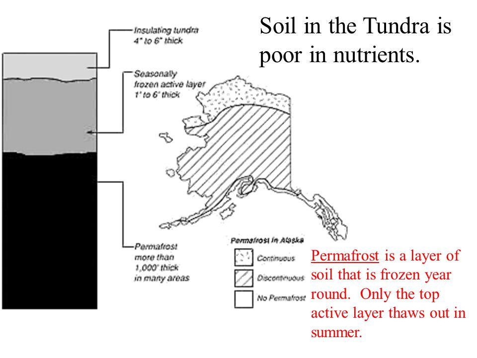 Soil in the Tundra is poor in nutrients.