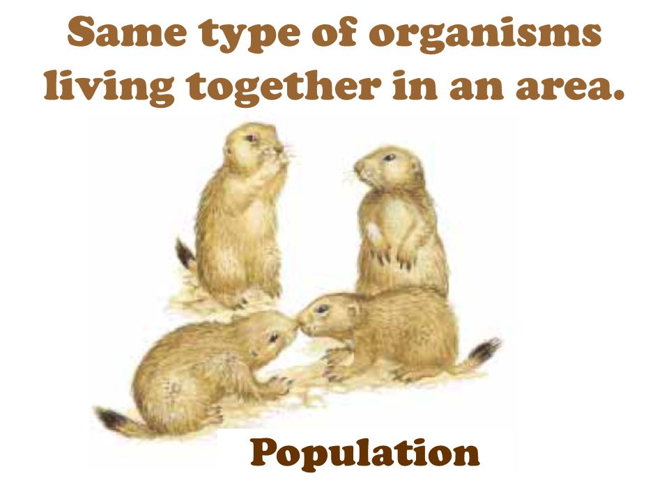 Same type of organisms living together in an area.