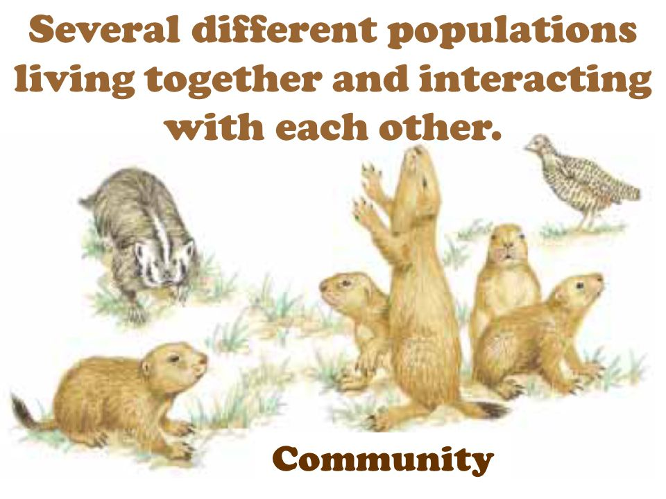 Several different populations living together and interacting with each other.