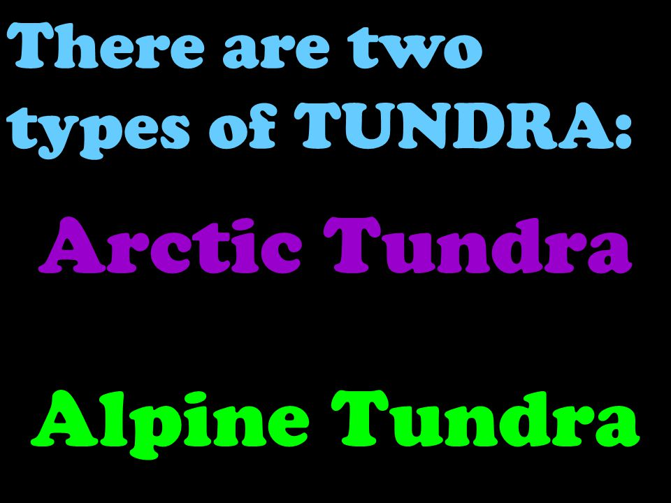 There are two types of TUNDRA: