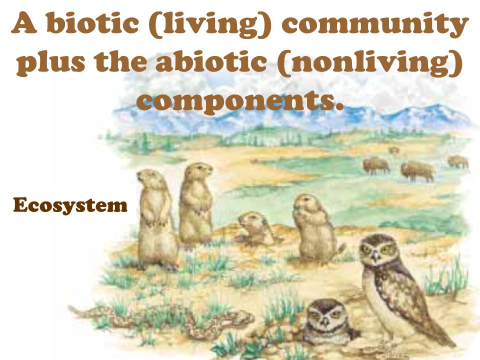 A biotic (living) community plus the abiotic (nonliving) components.